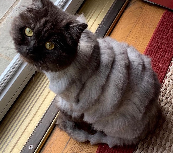weird cat haircuts