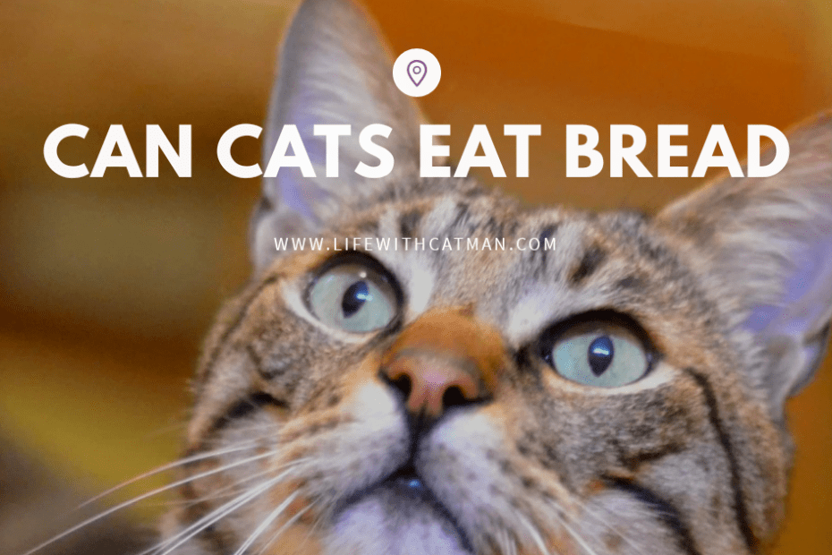 can cats eat bread