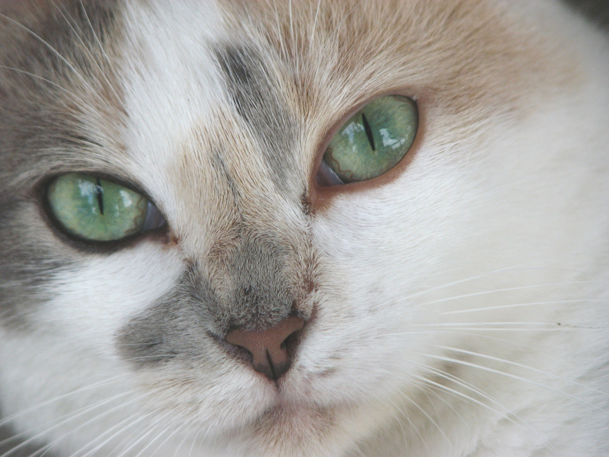 interesting facts about cat