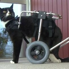 Wheelchair For Cats Algomatm C Frame Hanging Patio Chair Stand Blackie The Cat And His New Quest Life With This