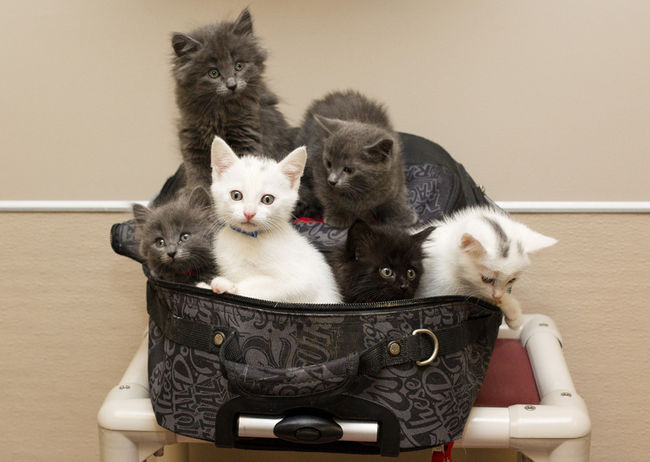 adorable abandoned backpack kittens