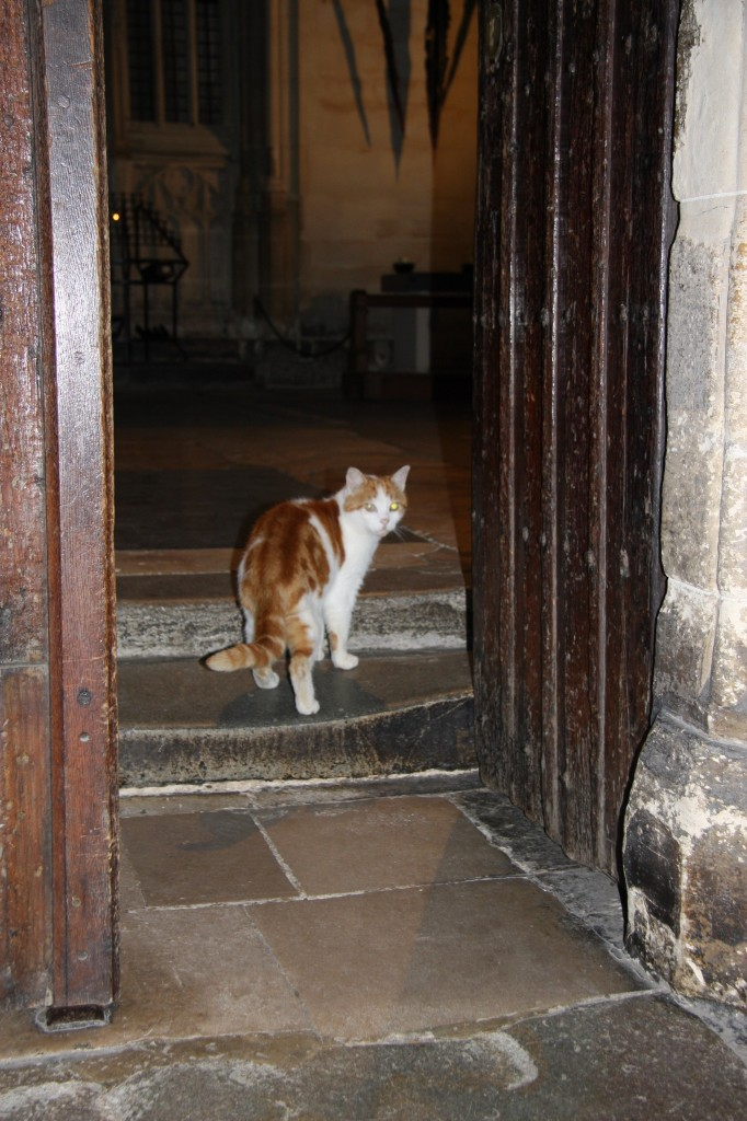 wheelchair for cats desk chair recliner laptop: canterbury cathedral cat remembered   life with