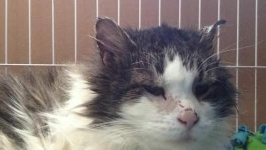 Tundra Shares His Happy Cat Rescue Story