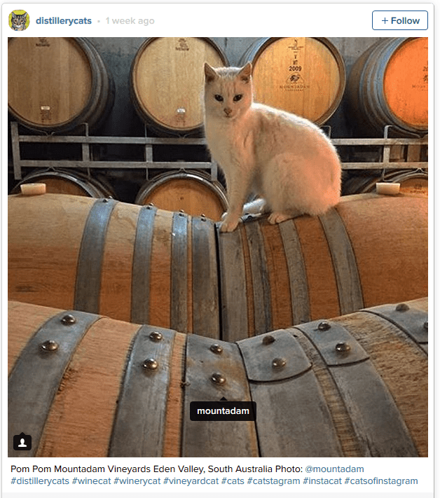 Brewery Cat 2