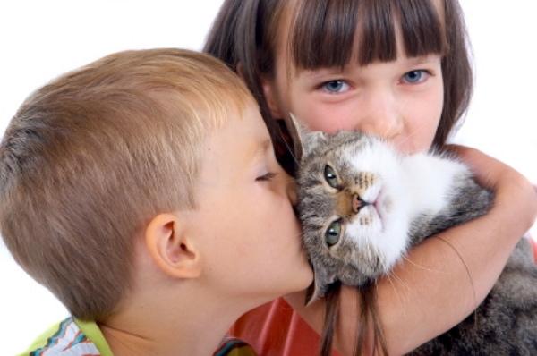 cat owner thepetproductguru
