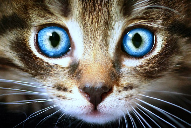 cats eyes are windows