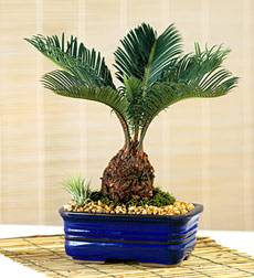 Common Household Plant Dangers  LIFE WITH DOGS