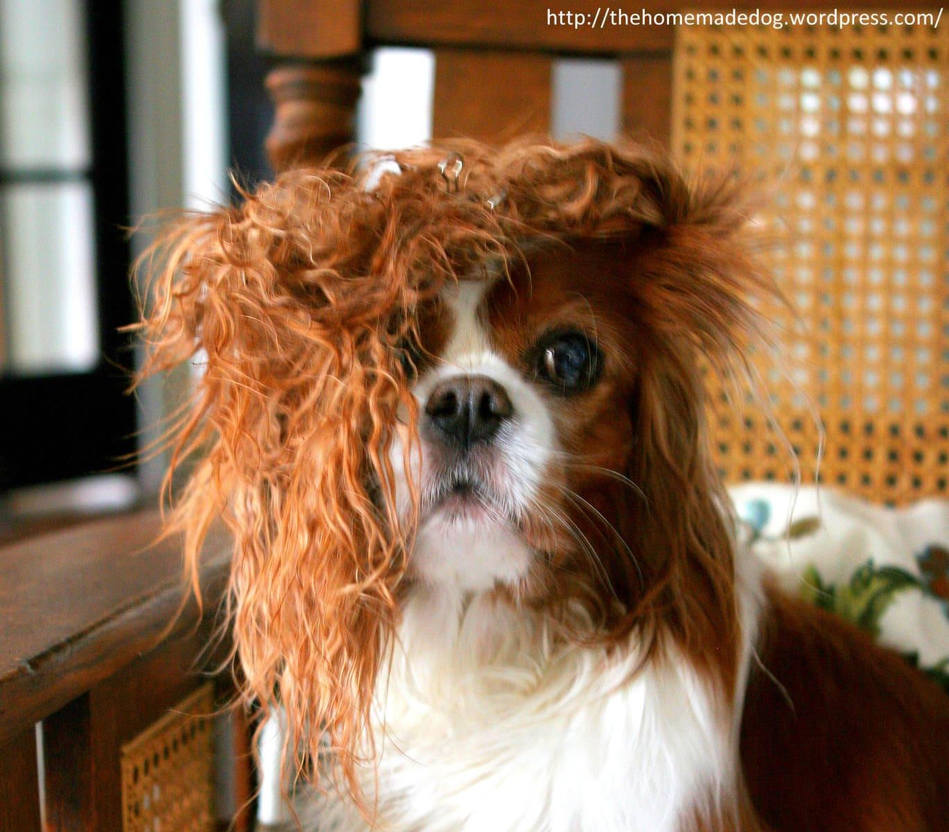 17 Dogs Having Really Bad Hair Days