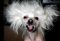 Bad Hair Day Dog | www.pixshark.com - Images Galleries ...