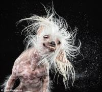 17 Dogs Having Really Bad Hair Days