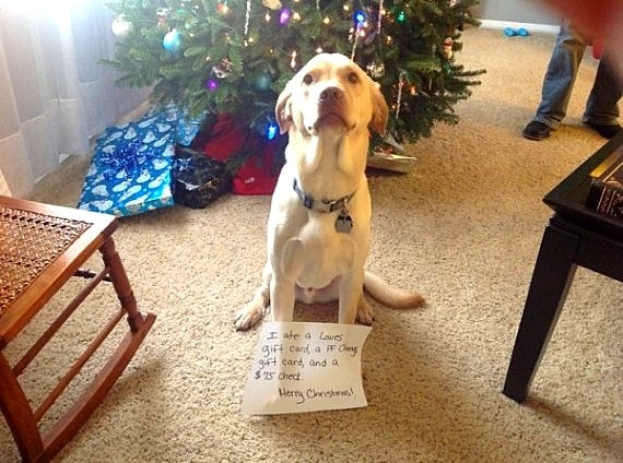 Pets Hellbent On Destroying Christmas Life With Dogs