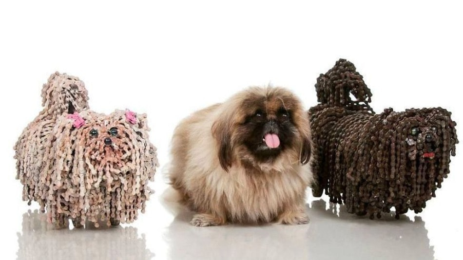 Image result for dogs