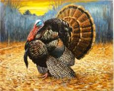 thanksgiving symbols turkey