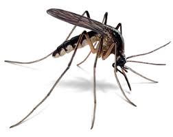 natural mosquito repellants