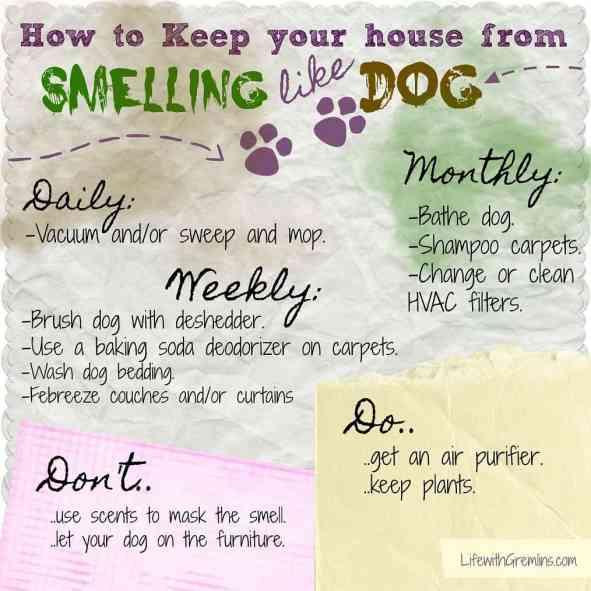 dog smell house checklist
