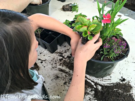 nursery gardening field trip Summer Bucket List
