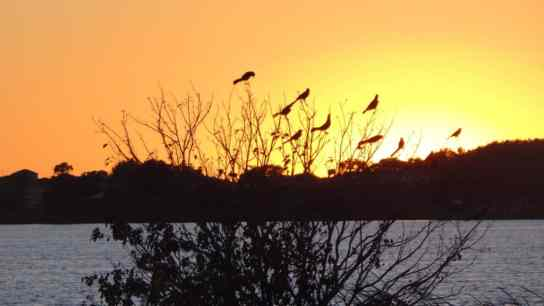 glowing orange sky with birds on bush
