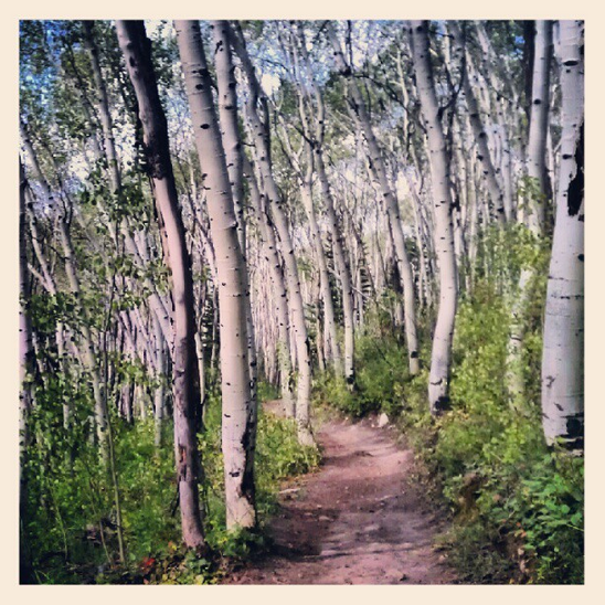 Beautiful trails at Aspen in Colorado.