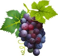 grapes, wine industry