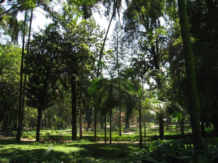 Muitas árvores
