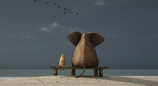 Agile as a Contemplative Discipline