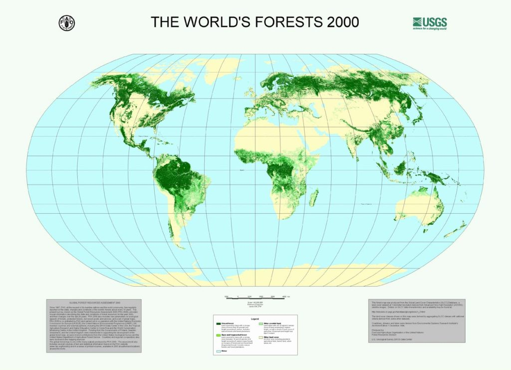 The World's forests in 2000