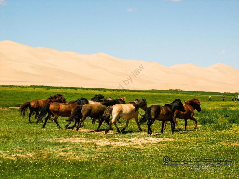 Mongolei 2003 101 - Mongolei 2003-101 - allgemein -