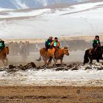 Mongolei 2003 43 - Hundeporträts - mehr als langweilige Fotos - tierportraets, portraets, allgemein - Tierporträts, Porträts, Hunde, Haustiere, Geschenke