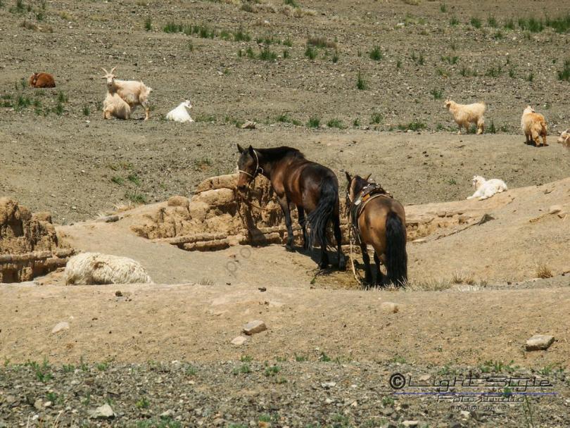 Mongolei 2003 88 - Mongolei 2003-88 - allgemein -