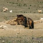 Mongolei 2003 88 - Wer sagt dass man bei Sch..... Wetter nicht auch fotografieren kann? - allgemein - Frauen, Fashion, Die Geschichte hinter den Fotos