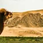 Mongolei 2003 92 - Mehlstaubshooting!!!! wirklich Mehl?.... Aufpassen Explosionsgefahr - portraets, non-commercial, funstuff, besondere-portraets, allgemein - Porträts, Märchenfotos, Männer, Frauen, emfehlenswerter Tip für Kollegen, besondere Porträts