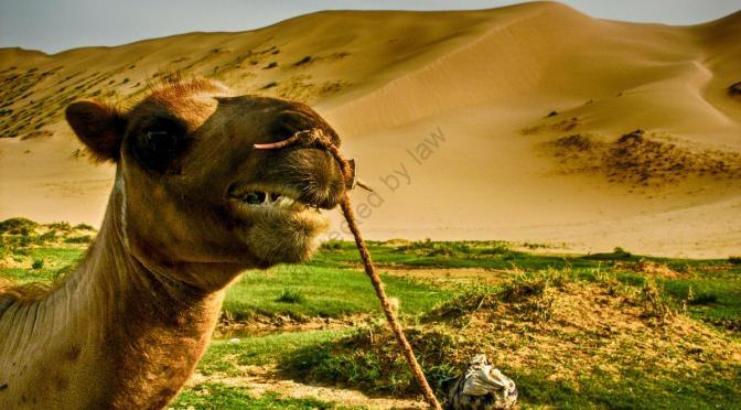 Mongolei – das Land der Unendlichkeit