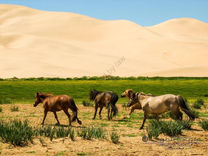 Mongolei 2003 98 - Mongolei 2003-98 - allgemein -