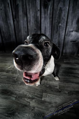 Hundeporträts, Hundeporträts – mal anders, Fotostudio Light-Style`s Blog