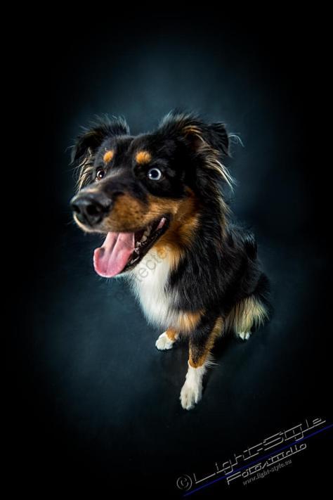 T17L0106 5 - Hundeporträts - mehr als langweilige Fotos - tierportraets, portraets, allgemein - Tierporträts, Porträts, Hunde, Haustiere, Geschenke
