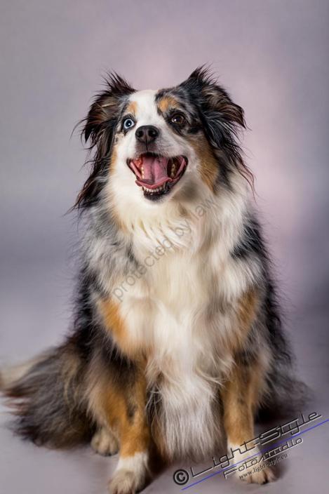 T17L0106 7 - Hundeporträts - mehr als langweilige Fotos - tierportraets, portraets, allgemein - Tierporträts, Porträts, Hunde, Haustiere, Geschenke