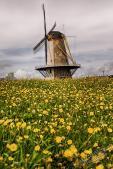 Holland 2017-128-Bearbeitet