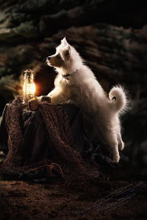 Hundeporträt - Fila-11