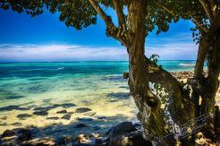 Mauritius 2018 286 1 - Mauritius 2018-Reisebericht & Fotos - urlaubsfotos, outdoor, non-commercial, naturfotos, natur, funstuff, allgemein - Urlaub, outdoor, Naturfotos, Ein Tag im Leben eines Fotografens, Draußen, Die Geschichte hinter den Fotos