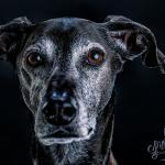 Tierporträt Carbon 2 - Kunst ist Leben - persoenliche-meinung, offene-worte, non-commercial, allgemein, abseits-des-alltags - Kunst ist ....