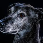 Tierporträt Carbon 3 - Valentinstag und meine Gedanken dazu ;-) - allgemein - Valentinsgeschenk, Liebe ist, Geschenke, Allgemein