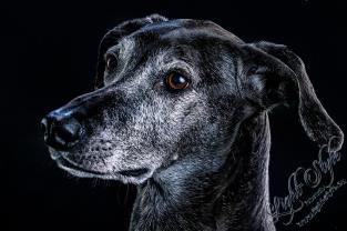 Hundeporträts, Von Kuscheltieren & Monstern ;-), Fotostudio Light-Style`s Blog