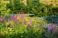 Rodenbach 2018 178 - Neues aus Rodenbach - rund-um-rodenbach, outdoor, naturfotos, natur, abseits-des-alltags - Tierfotos, outdoor, Naturfotos, Draußen, Deutschlands schöne Seiten