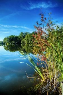 Rodenbach 2018 231 - Neues aus Rodenbach - rund-um-rodenbach, outdoor, naturfotos, natur, abseits-des-alltags - Tierfotos, outdoor, Naturfotos, Draußen, Deutschlands schöne Seiten