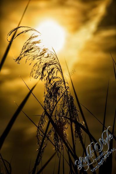 Umland Rodenbach, Neues aus Rodenbach, Fotostudio Light-Style`s Blog
