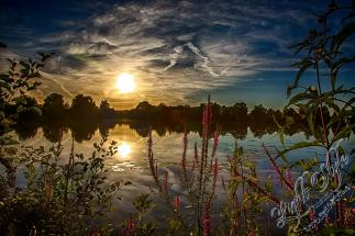 Rodenbach 2018 311 - Neues aus Rodenbach - rund-um-rodenbach, outdoor, naturfotos, natur, abseits-des-alltags - Tierfotos, outdoor, Naturfotos, Draußen, Deutschlands schöne Seiten