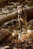 Hundeporträt outdoor 05 - Langweilige Hundefotos?---- neeeeeeee ;-) - tierportraets, outdoor, naturfotos - Tierfotos, outdoor, Hundeporträts, Geschenke, Ein Tag im Leben eines Fotografens, Draußen