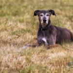 Hundeporträt outdoor 08 - Bewerbungsfotos , wichtig oder blankes Beiwerk - allgemein - Infos, Businessporträts, Businessfotos, Bewerbungsfotos