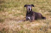 Hundeporträt outdoor-08
