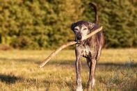 Hundeporträt outdoor 12 - Langweilige Hundefotos?---- neeeeeeee ;-) - tierportraets, outdoor, naturfotos - Tierfotos, outdoor, Hundeporträts, Geschenke, Ein Tag im Leben eines Fotografens, Draußen